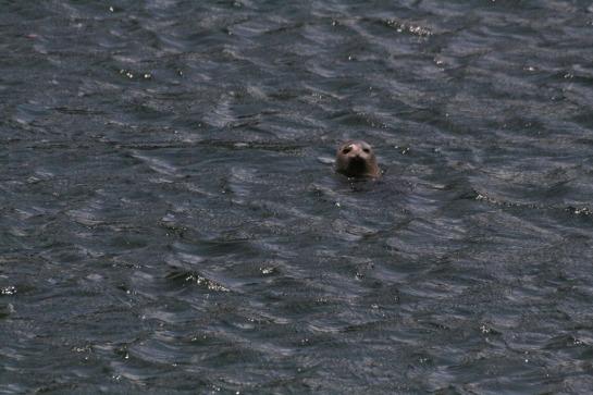 seal at banrty bay